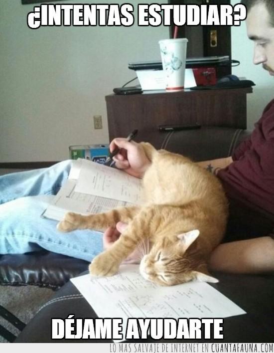acostarse,ayudar,entrometido,estudiar,gato