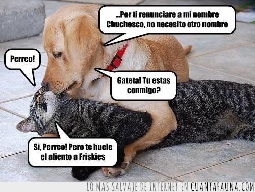 amor,Gateta,Julieta,Perreo,Romeo,teatro
