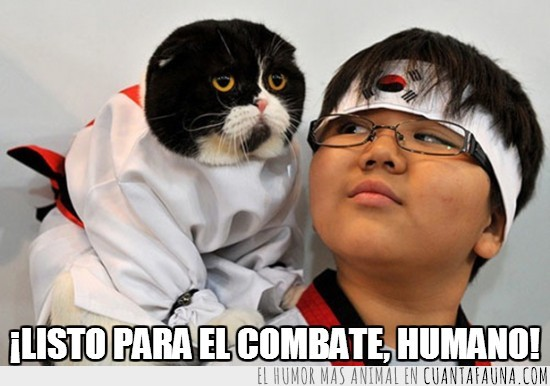 combate,corea del sur,gato,kimono,listo,luchador,preparado