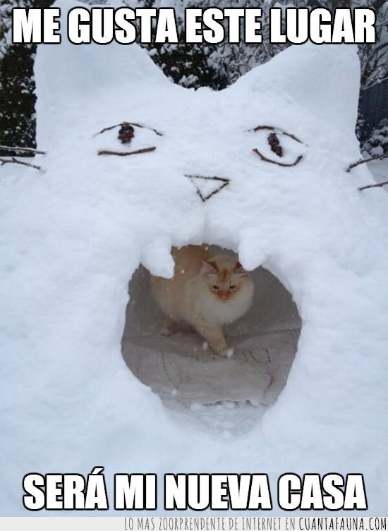 casa,gato,le gusta,nieve,refugio
