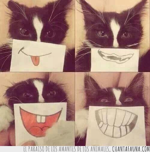 divertido,expresion,gato,gracioso,sonrisa