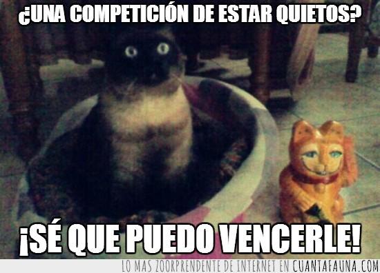 competición,estar quieto,figura,porcelana,un gato de yeso,vencer