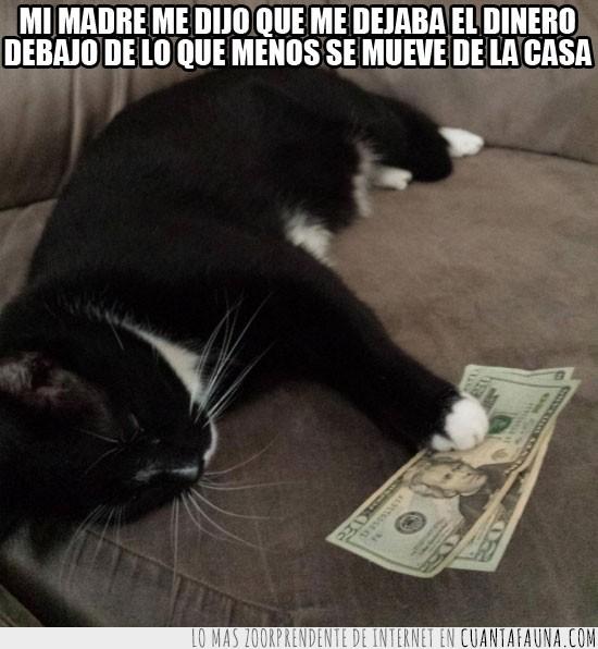 billetes,debajo,dinero,gato,moverse,siesta,sin movimiento