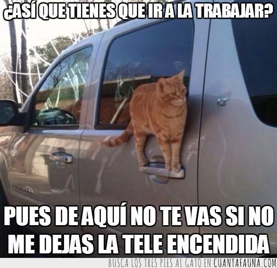 coche,dueño,gato,impedir,maneta,subido,todoterreno,trabajar