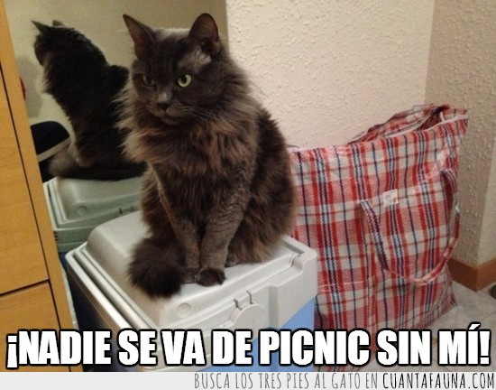 al campo,gato,nevera portatil,Picnic,sin mi