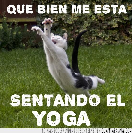bien,estirar,sentar,yoga