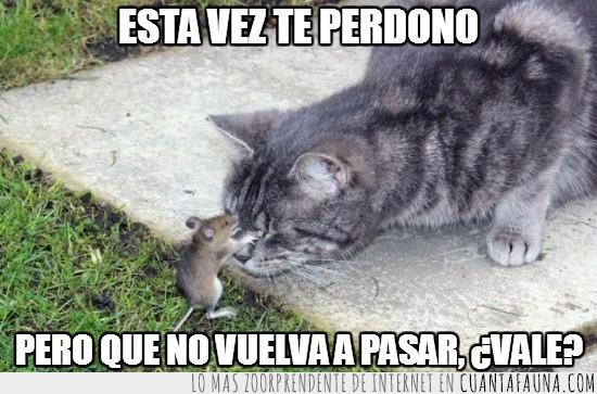 gato,perdonar,ratón,valiente
