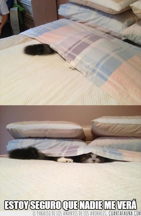 almohadas,cama,escondite,gato,mal escondite,sabana,tiempos