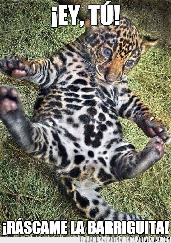 cachorro,leopardo,pancita,rascar,se le ve todo,ternura