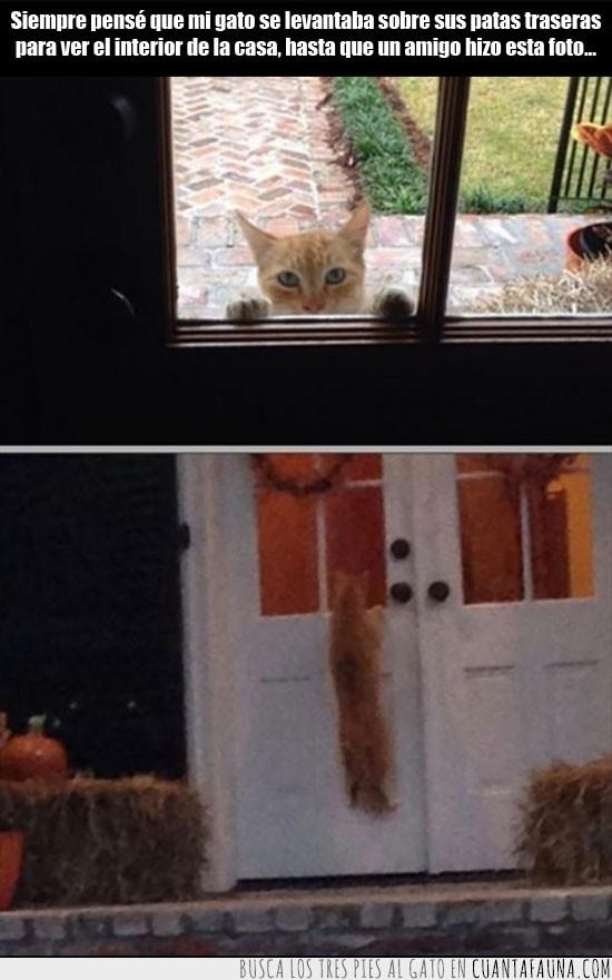 altura,de pie,esta fuerte,gato,mirar,puerta,trepar