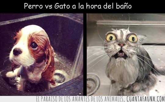 adorable,bañera,baño,gato,mojado,perro