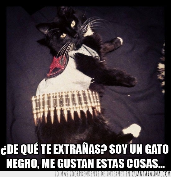 balas,black,black metal,cat,chaleco,gato negro,metal