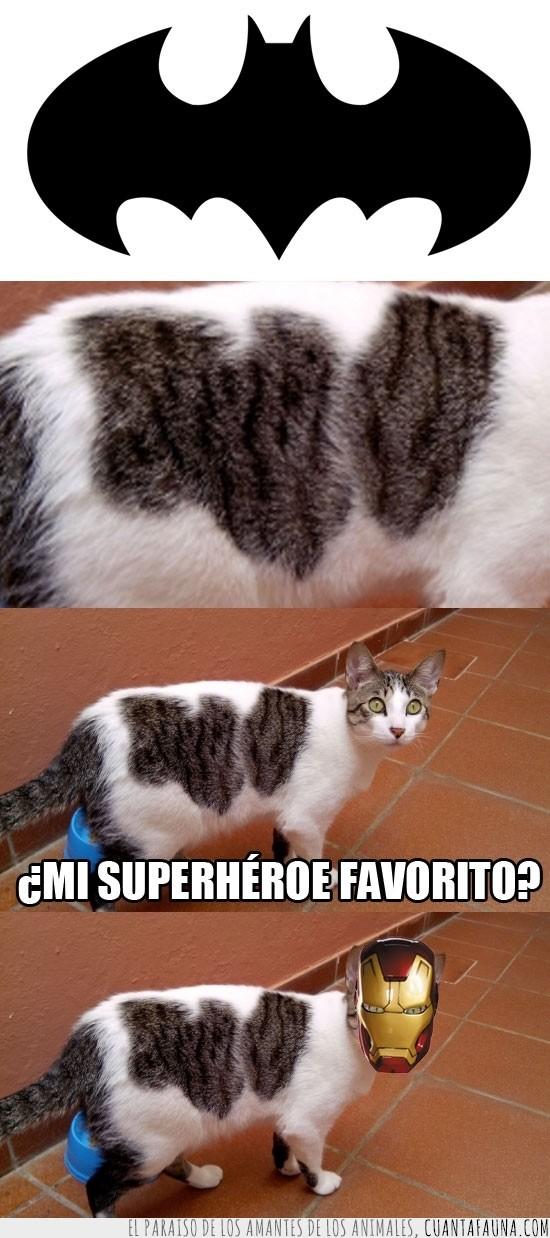 batman,cat,gato,gordo,iron man,love
