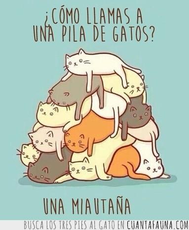 apilados,camada,gato,grupo,miau,montaña