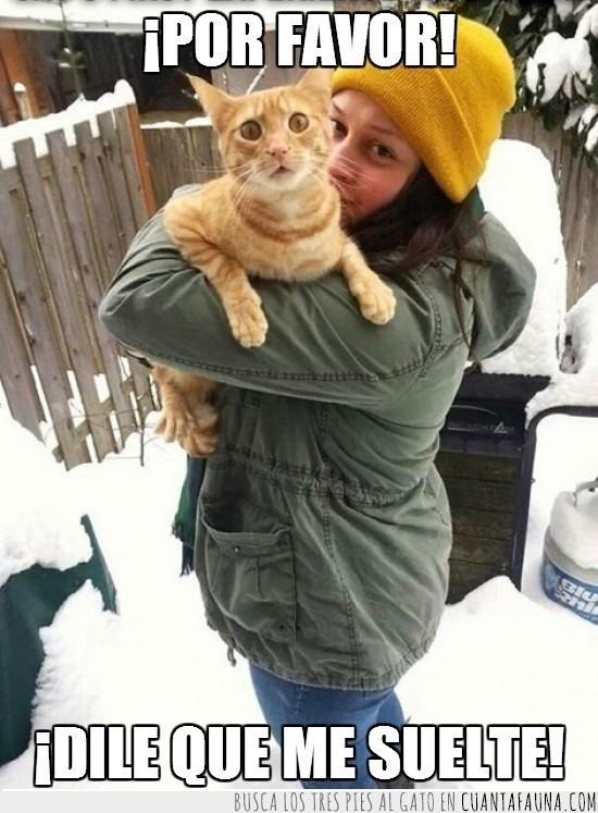 gato,mirada,mirar,nieve,pedir,soltar