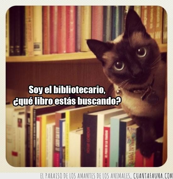 bibliotecario,gato,libreria,libros
