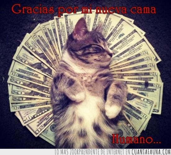 billetes,cama,dinero,gato,pasta