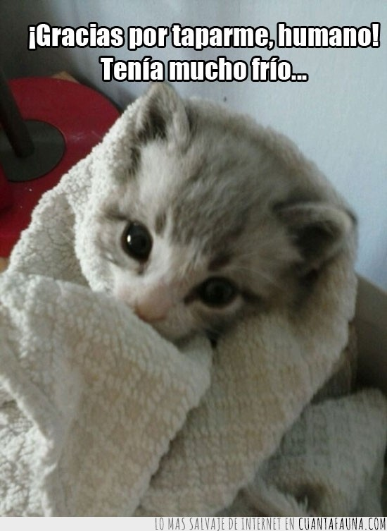 blanco,frio,pequeño,tapar,toalla