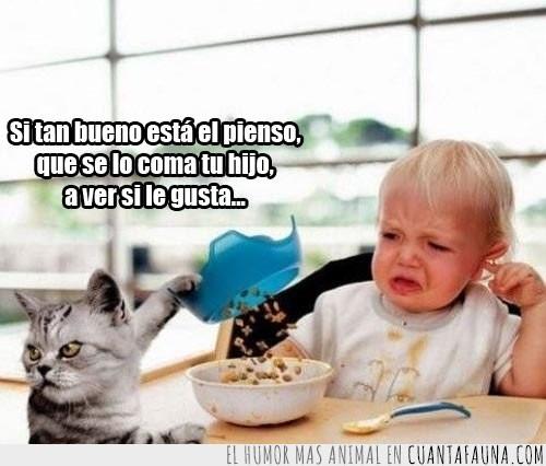 batalla,bebés,bueno,comida,echar,enfadado,gatos,pienso,plato