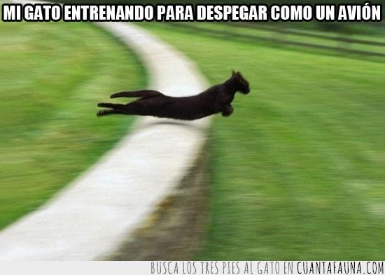 avión,entrenando,gato,negro