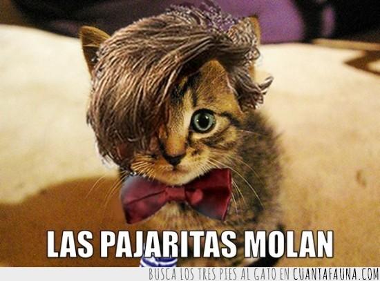 10040 - El gato del Doctor Who