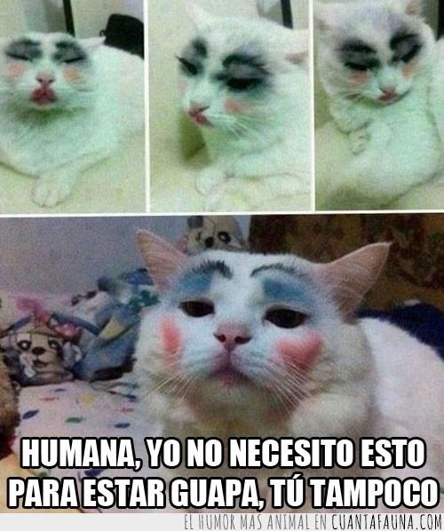 Carmen de Mairena,crueldad,dueño preparate,feo,gatillo,loro,maquillaje,pobre,te acompaño en el sentimiento gato,venganza