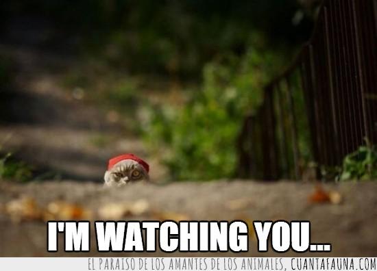 asomado,espiar,gato,observar