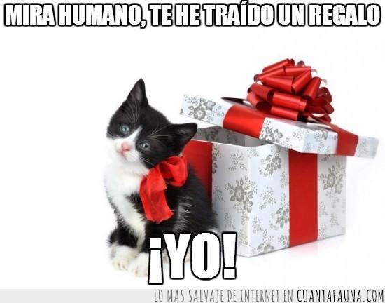 cachorro,caja,envuelto,gato,lazo,Regalo