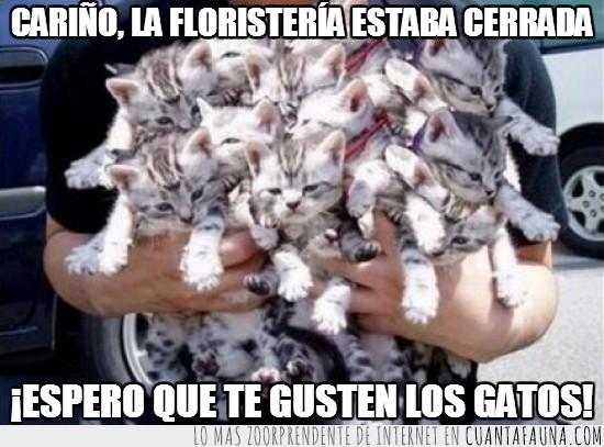 floristeria,Gatos,manojo,ramo,regalo