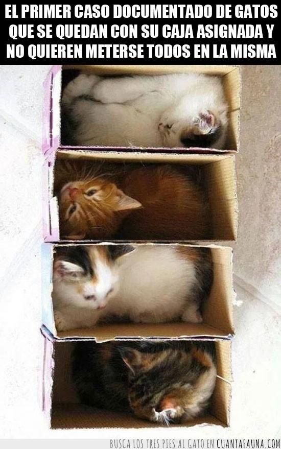 apilables,cajas,cartón,comunidad,gatitos,Gatos,guardar,jugar,ordenar,vecinos
