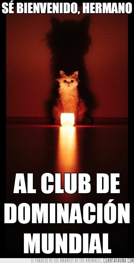 club,dominación,gatos,mundial,secreto,vela