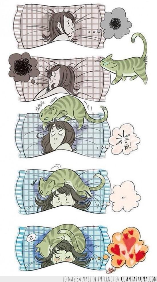 dormir,dueña,gato,preocupación,tranquilizar
