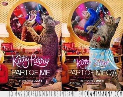 concierto,katy perry,kitty purry,musical,parodia