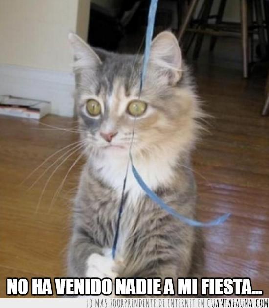 cumpleaños,fiesta,forever alone,gato,solo,triste