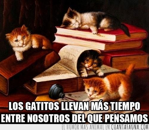 escrito,gatitos,Gatos,jugar,libros,monada,pintura,pluma