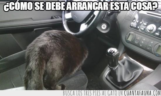 arrancar,conduciendo,conducir,gato,negro
