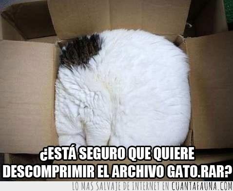 descomprimir,feel like a ninja,gato en la caja,gato.rar,nadie notará que soy un gato
