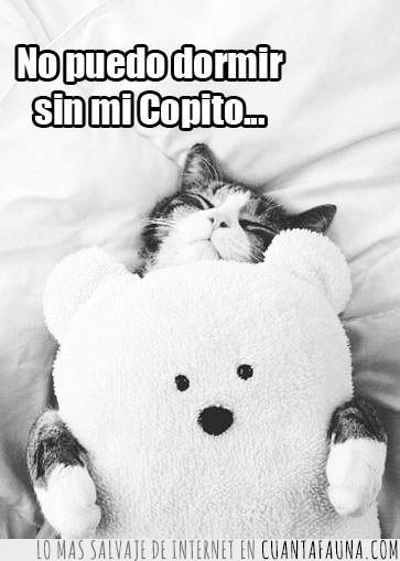 compañía,conciliar,dormir,Gato,miedo,osito,peluche,sueño