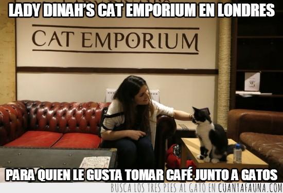 Cafés de gatos,Londres
