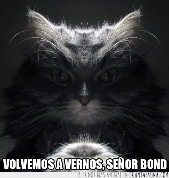 007,Agente secreto,fotogenico,gato,malvado