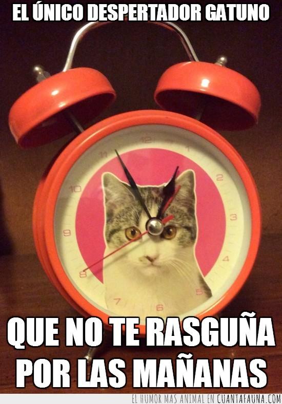 arañar,despertador,despertar,gato,mañanas,reloj