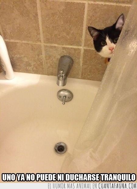 cortina,ducha,espiar,mirada fija,vigilar