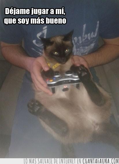 gato,mando,videojuegos,xbox 360