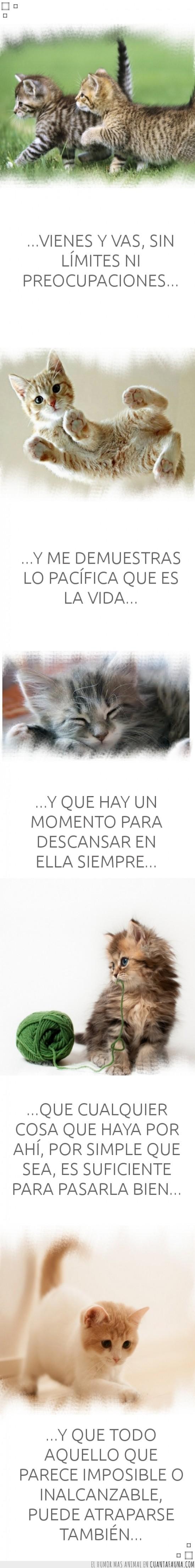 atraparse,descansar,disfrutar,enseñanzas,filosofía,gatitos,ser feliz como los animales