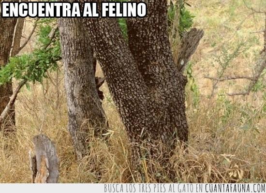 arbol,buscar,encontrar,felino,leopardo,maleza,ninja,tronco