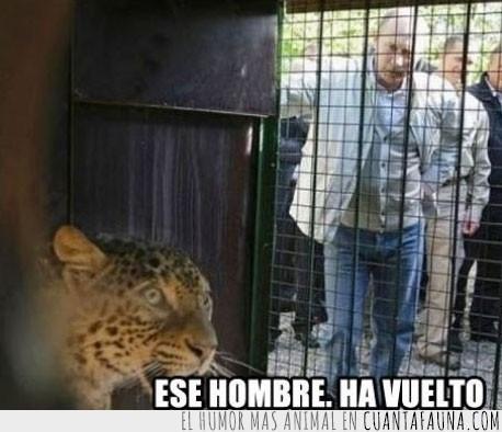 jaguar,jaula,leopardo,miedo,putin,zoologico