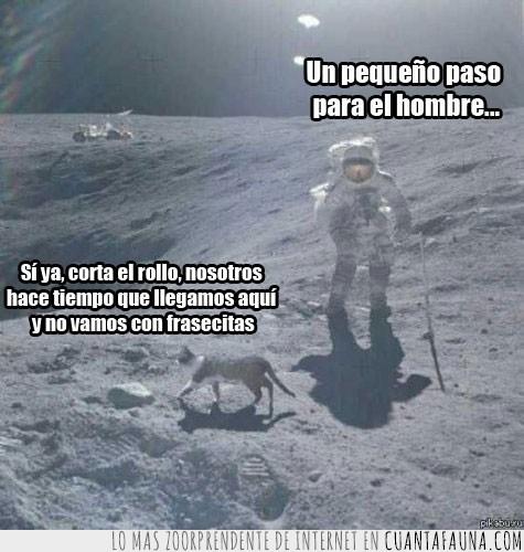astronautas,aterrizaje,frasecita,gato,hallar,Houston,Luna,un pequeño paso para el hombre