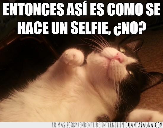 foto,gato,mirada seductora,móvil,selfie