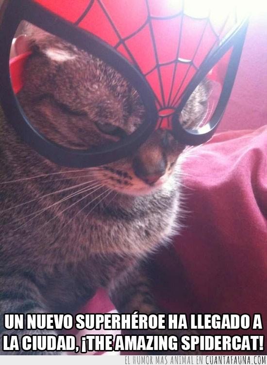 enfadado,mascara,nyanya,spidercat,spiderman