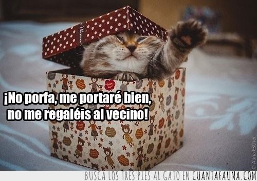caja,gatito,portar bien,regalar,regalo,vecino